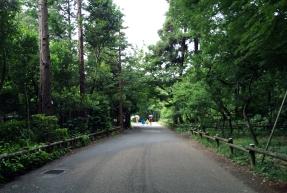 Walking through Inokashira Park in the rain